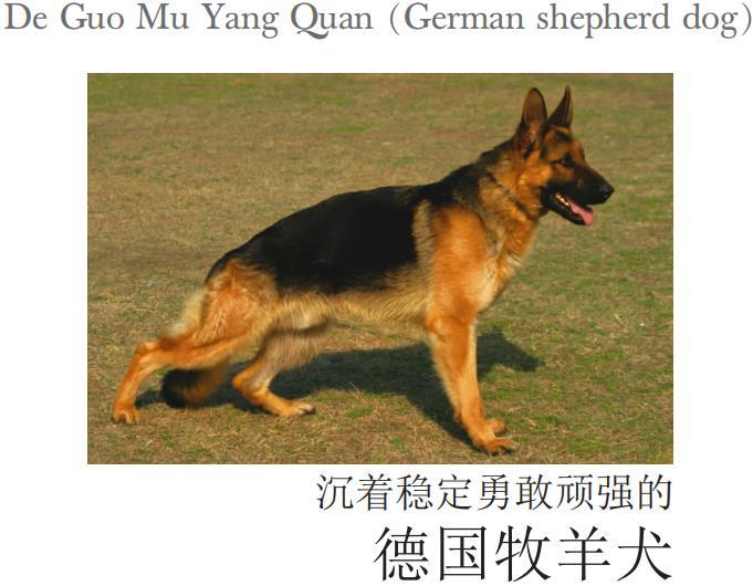 德国牧羊犬.吴德华.pdf
