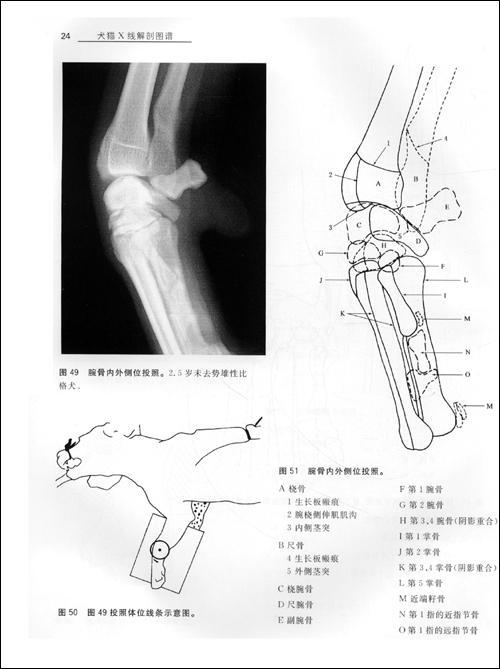 犬猫X线解剖图谱(国家重大出版工程项目).pdf