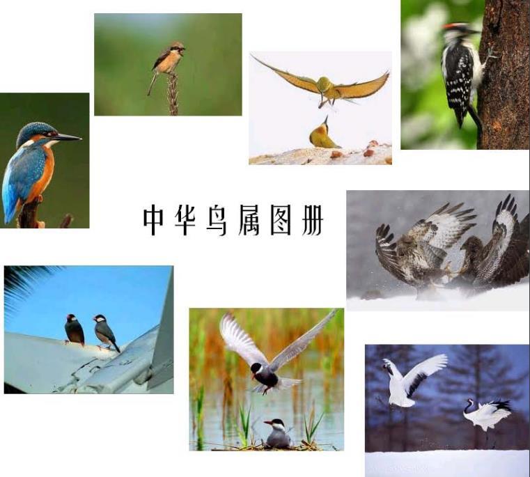 中华鸟属图册 2010.pdf