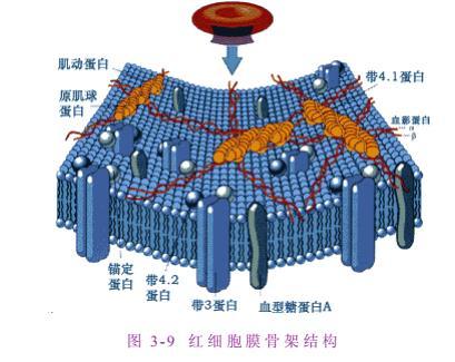 细胞生物学名词解释(王金发).pdf