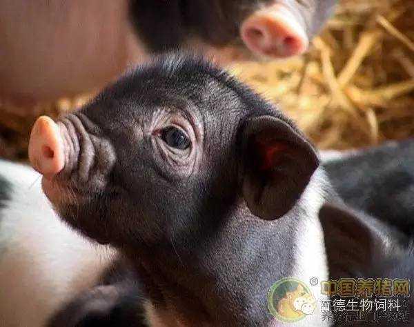 猪源沙门菌分离鉴定与耐药性分析_蒋增海.pdf