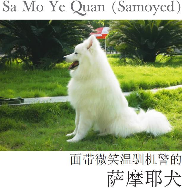 萨摩耶犬-李群.pdf