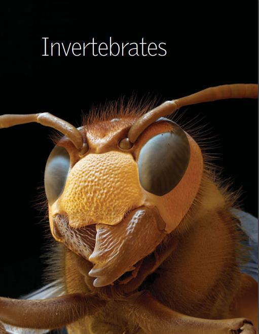 神奇无脊椎动物(英文原版)大英百科全书系列.pdf
