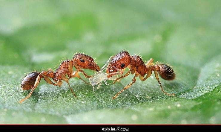中国蚂蚁.pdf