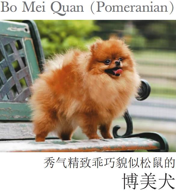 博美犬.颜泽清.pdf
