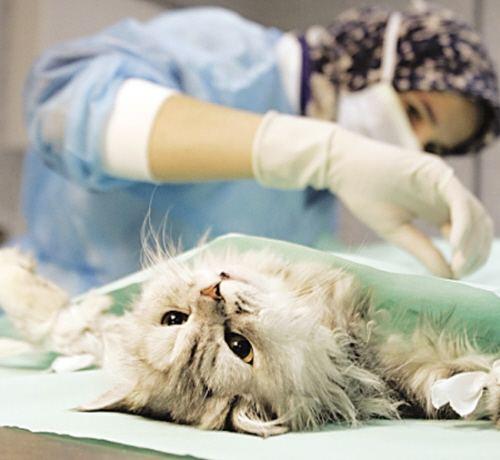 小动物输液学.pdf兽医师的临床治疗学的真实水平现出