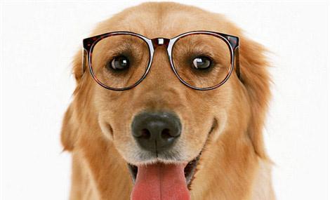 扮靓您的爱犬.pdf,教你如何为短毛犬梳理毛发
