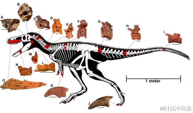 动物进化之谜(挪亚方舟之前) (英)A·查理格等着.pdf