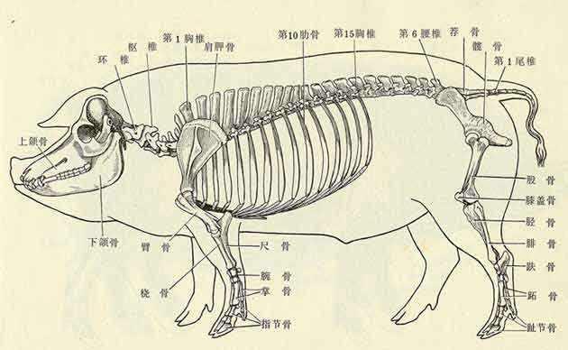 动物解剖生理学.郑志远.pdf